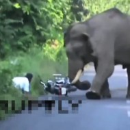 【衝撃映像】インド象VS二人乗りバイクが圧倒的過ぎる・・・w