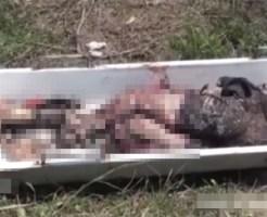 【グロ動画】バラバラ死体発見現場が壮絶すぎる・・・