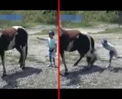 【悲報】ワイ将、馬に触りたくて近づくも膝蹴りされて無事死亡