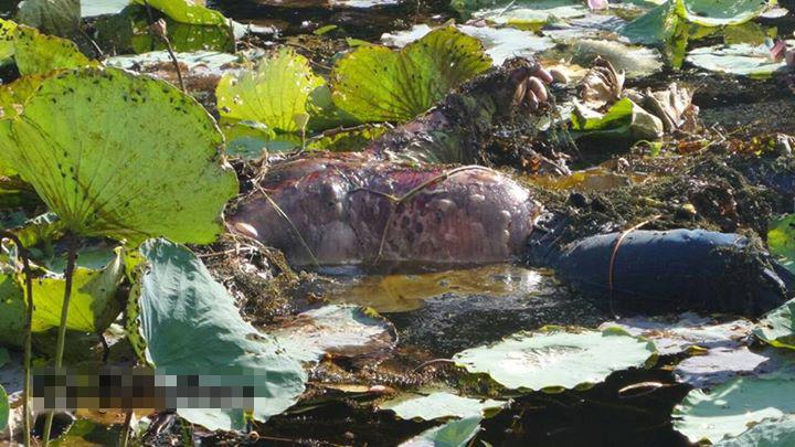 【グロ画像】水揚げされた水死体の顔が完全ホラー・・・ ※閲覧注意