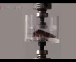 【閲覧注意】ゴキブリが室内入ってくる方法が遂に判明するw