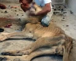 【グロ画像】放置された動物園の檻の中にいたライオン・・・