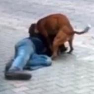 【獣姦レイプ】酔っ払った人が路上で犬にレイプされてる映像が話題に!