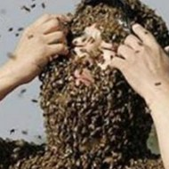 【閲覧注意】アフリカ殺人蜂に刺されて死んだ人達を公共電波でそのまま放送してるテレビがあるんだが・・・