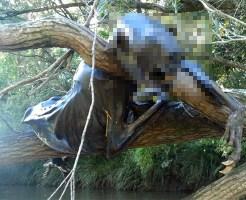 【未確認生物】オーストラリアでついに化物UMAが発見される!!!