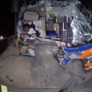 【衝撃映像】野良ゾウと大型バスの正面衝突事故の瞬間を撮影!生き残ったのは象か運転手か!?