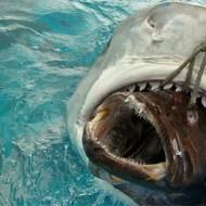 【閲覧注意】サメのお腹切ったら意外なものが出てきた件