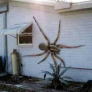 【超閲覧注意】ぎゃあぁあ!!馬鹿デカイ蜘蛛の背中に大量の赤ちゃんが!これはアカン!