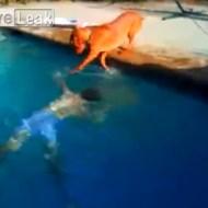 【おもしろ】ちょ!!ご主人様!!! 溺れたと勘違いした超心配性なワンコwww【動画2つ】