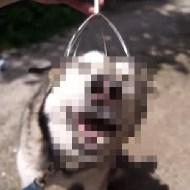 【犬動画】犬にこれやったらアヘ顔が直らないwww