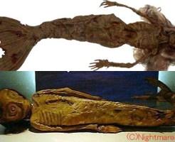 【閲覧注意】人魚の死体ってなんでこんなグロイのばっかなの?