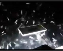 【おもしろ】ダイナマイトで魚を捕る。魚が船に飛び込んでくる衝撃映像!
