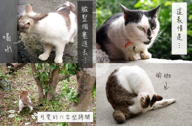 【侯硐貓村】貓咪物語.貓咪生活實況轉播!新北瑞芳