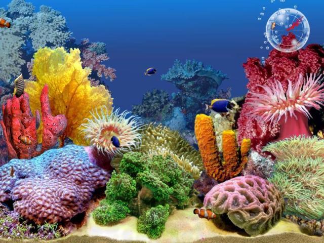 3D Tropical Fish Aquarium Screensaver : 3D Tropical Fish Aquarium
