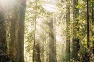 每個人的心都是一片森林,不要讓走不出的執著傷害了他 – 這就是旅行的意義
