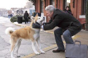 忠誠的意義,在於我們不應該忘記愛過的每一個人。——《忠犬小八》——我們用電影寫日記