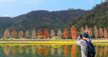 「全台超好拍的 6 大優美的天然網美景點」林蔭大道和落羽松景點是拍照重點!