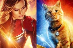 「《驚奇隊長》中的黃貓有什麼身世之謎?」粉絲驚訝:牠的來頭不小!… – 我們用電影寫日記