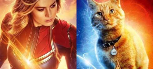「《驚奇隊長》中的黃貓有什麼身世之謎?」粉絲驚訝:牠的來頭不小!... - 我們用電影寫日記