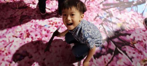 很推薦一看的●蜷川實花展●我喜歡大鳴大放的強烈存在