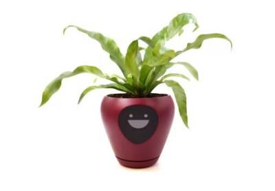 Turn Your Plant Into A Tamagotchi Game (11 pics + 1 gif + 1 video) - Izismile.com