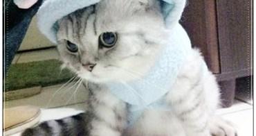 【貓咪】我和麥克先生,七夕情人節快樂