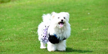 [桃園平鎮]奔跑吧~!狗狗~!綠風草原餐廳!