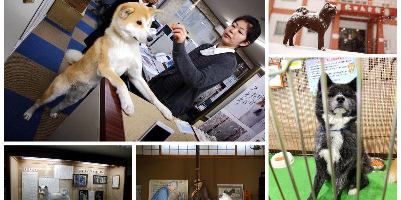 [日本秋田]一窺秋田犬的古往今來,秋田犬的知識寶庫,原來秋田犬跟你想的不一樣!秋田犬會館