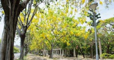 【台南景點】初夏黃金雨,阿勃勒盛開~~ 台南阿勃勒賞花攻略