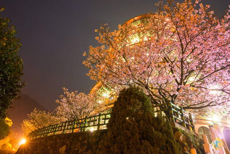 淡水賞櫻推薦》無極天元宮 –  櫻花盛開 好景點