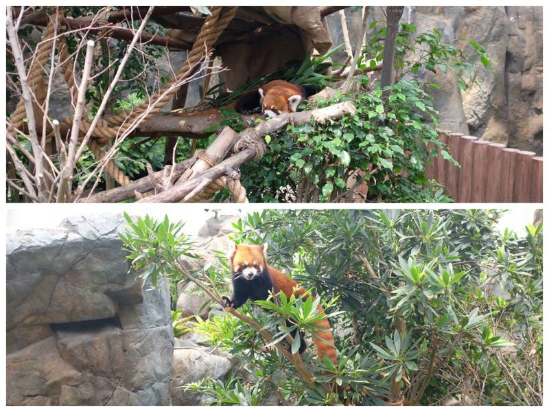 大熊貓之旅2