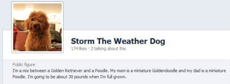 Storm weather dog Facebook