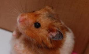 Police made the grisly discovery of a fried hamster
