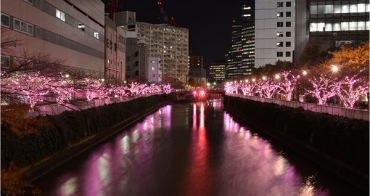 目黑川冬之櫻,冬天也可以賞櫻花~2016東京聖誕燈飾