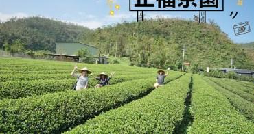 宜蘭冬山景點   正福茶園 採茶體驗 台灣在地生產 生態永續經營茶園 通過有機及履歷嚴格檢驗