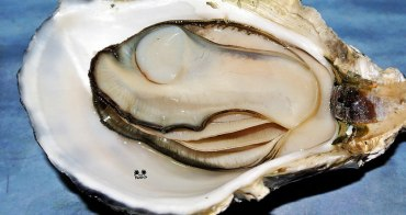 團購美食 | 郭家賜福牡蠣 澎湖伴手禮 特選牡蠣禮盒組 宅配海鮮美食