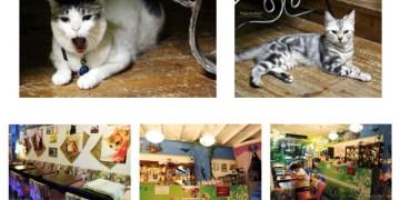 捷運淡水站美食 | 貓雨咖啡 貓咪餐廳 以流浪貓為主題的複合式餐廳