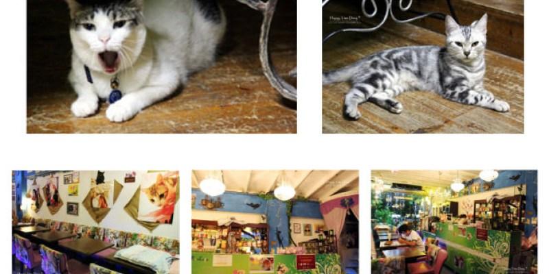 捷運淡水站美食   貓雨咖啡 貓咪餐廳 以流浪貓為主題的複合式餐廳