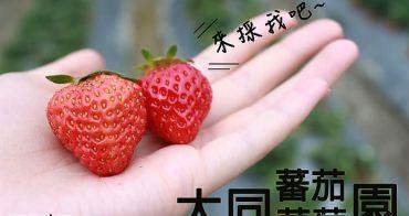 關西採草莓 ▌新竹也可以採草莓,到「大同番茄草莓園」抓緊草莓季尾巴