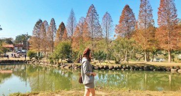 新竹景點一日遊|免門票!迷你倒影鏡面落羽松「北埔六塘落羽松」