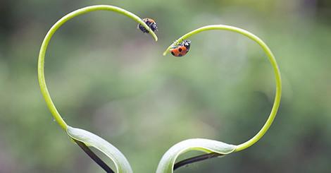 【心理測驗】測測看在愛情中你是哪種小飛蟲性格呢?蝴蝶般美麗還是蜜蜂般奮不顧身?