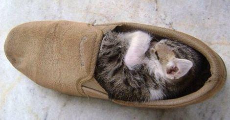 18張超可愛動物睡覺照,但睡的地方卻超怪異!