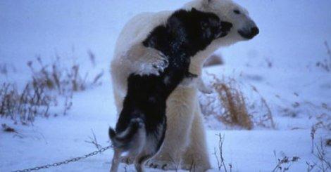 超萌的21張動物擁抱照!看完心情瞬間被療癒了~