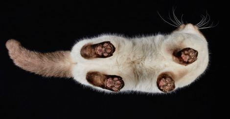 我也想當地板給貓踩踩