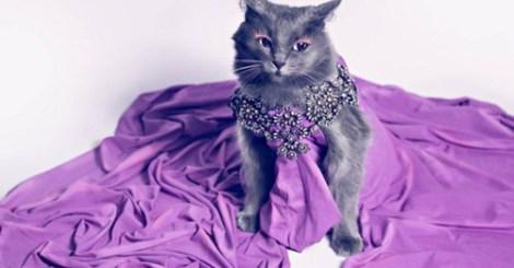 【寵物】史上最高貴的貓咪!你家也有這樣的貴婦貓嗎?