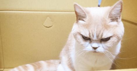 【寵物】每天看起來都超生氣的超不爽貓!別怪我沒提醒你別惹牠!