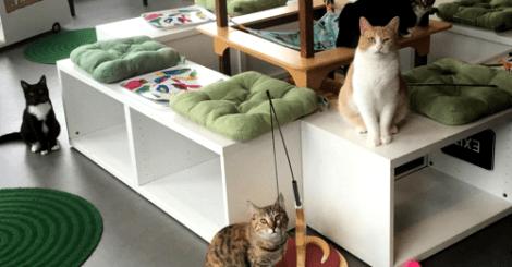 【旅行】這些餐廳除了餐點,還有刺蝟貓頭鷹與貓咪相陪!
