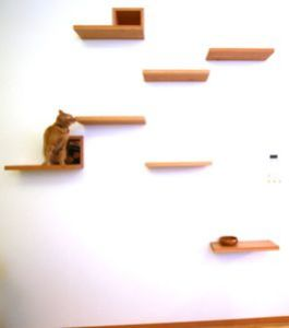 maison-chat.jpg