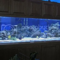 900 gallon fish tank for sale - $1 Gallon Fish Tank Sale
