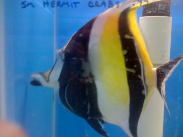 Petco Saltwater Fish Not only is that fish sick, but it is a sick